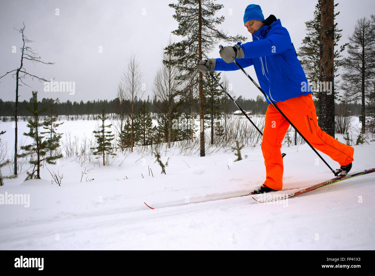 Salla ski resort. Cross-country sky. Deep in the wilderness of heavily snow laden coniferous trees and rugged fell - Stock Image