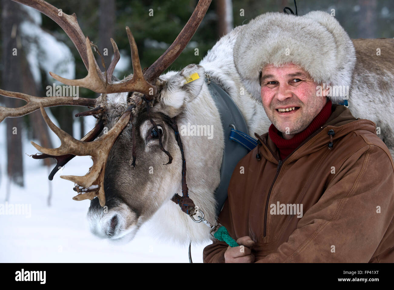 Portrait of a shepherd with his reindeer. Reindeer farm in Salla, Lapland Finland. The reindeer is an icon of Finnish - Stock Image