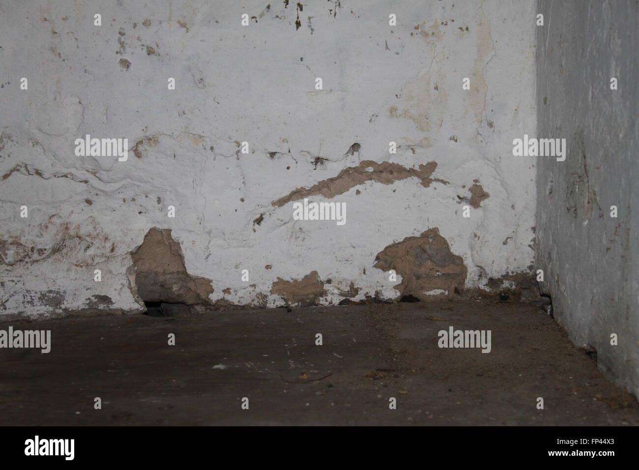 Corner of an old damp cellar - Stock Image