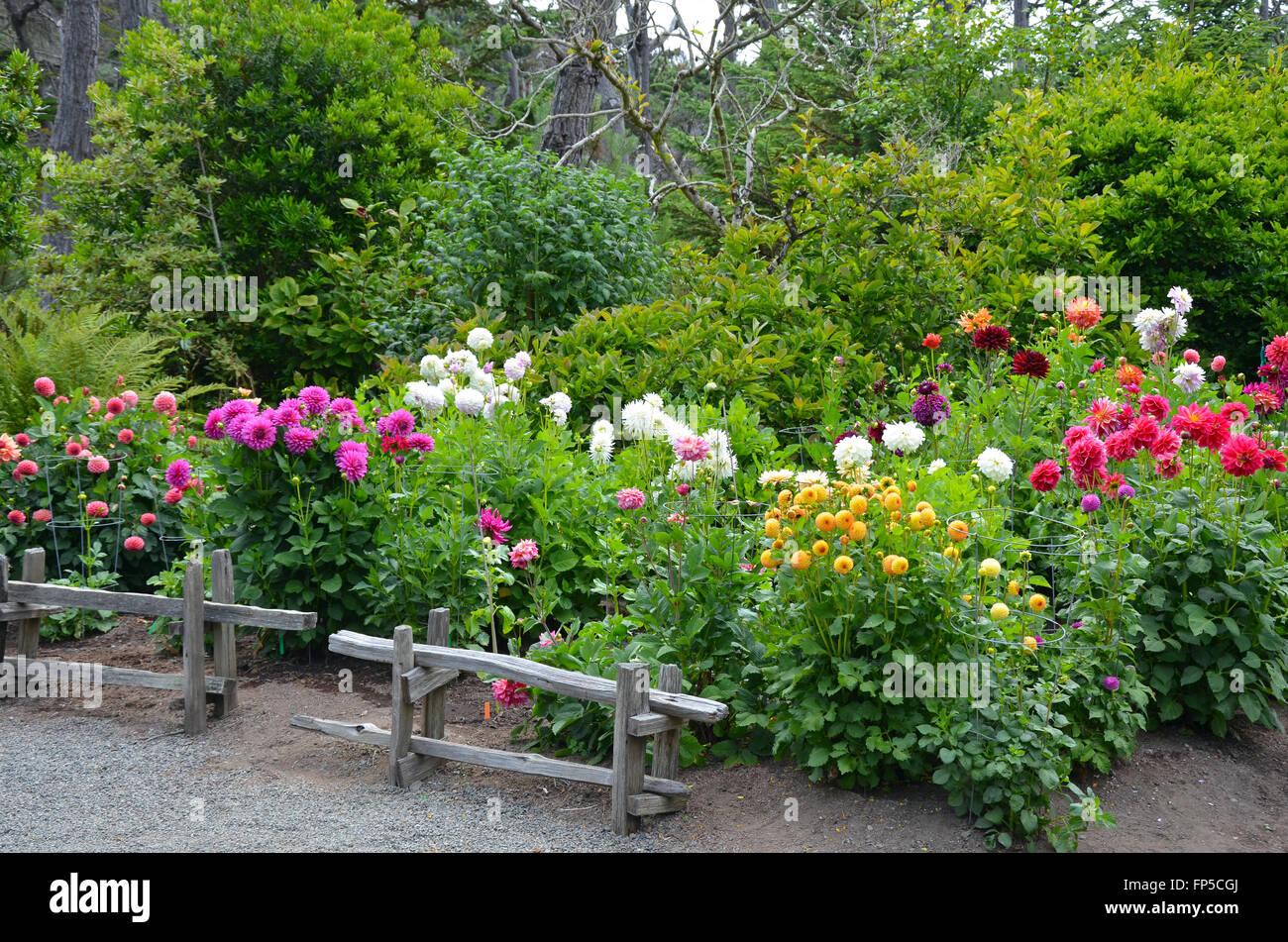 Colorful Dahlia Flower Garden In Lush Green Park Stock Photo Alamy