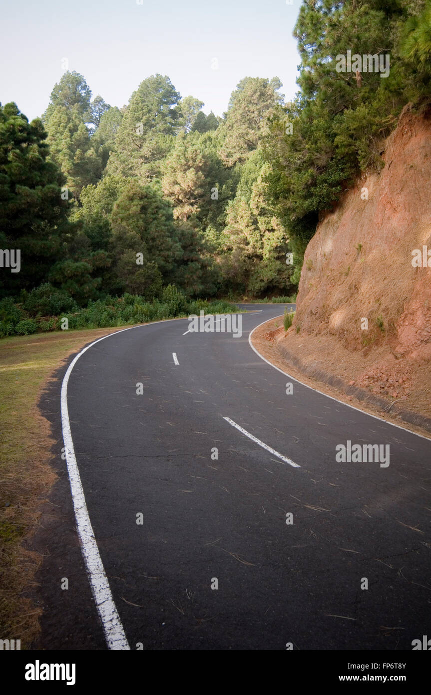 curve curved road roads corn corners sweeping bend bends forest fast forests drive driving good smooth - Stock Image