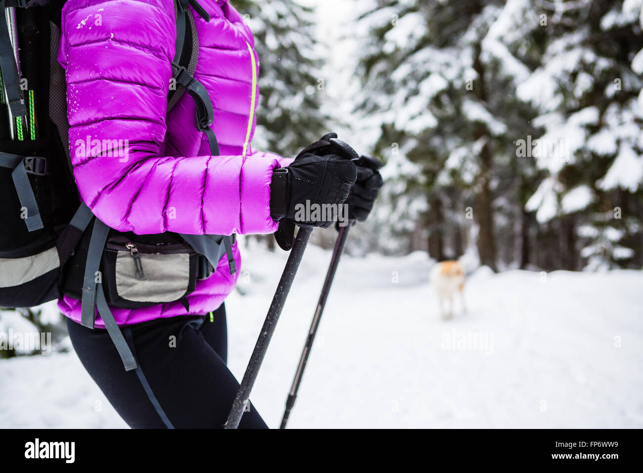 Winter trek in white woods. Woman hiking trekking in winter forest with dog. Travel recreation fitness and healthy - Stock Image