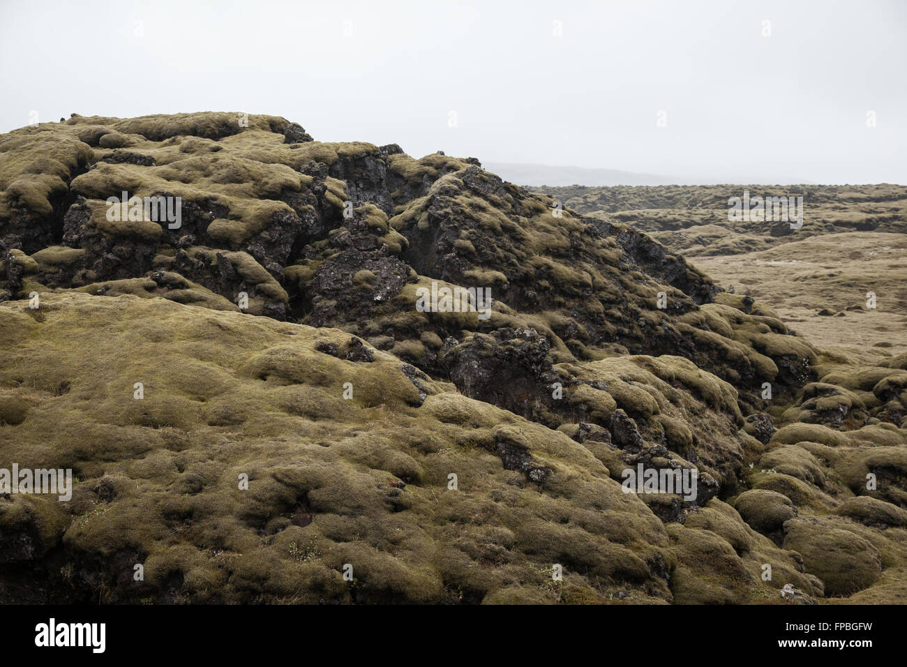 Lava field covered with moss, Kirkjubaejarklauste, Southern Iceland - Stock Image