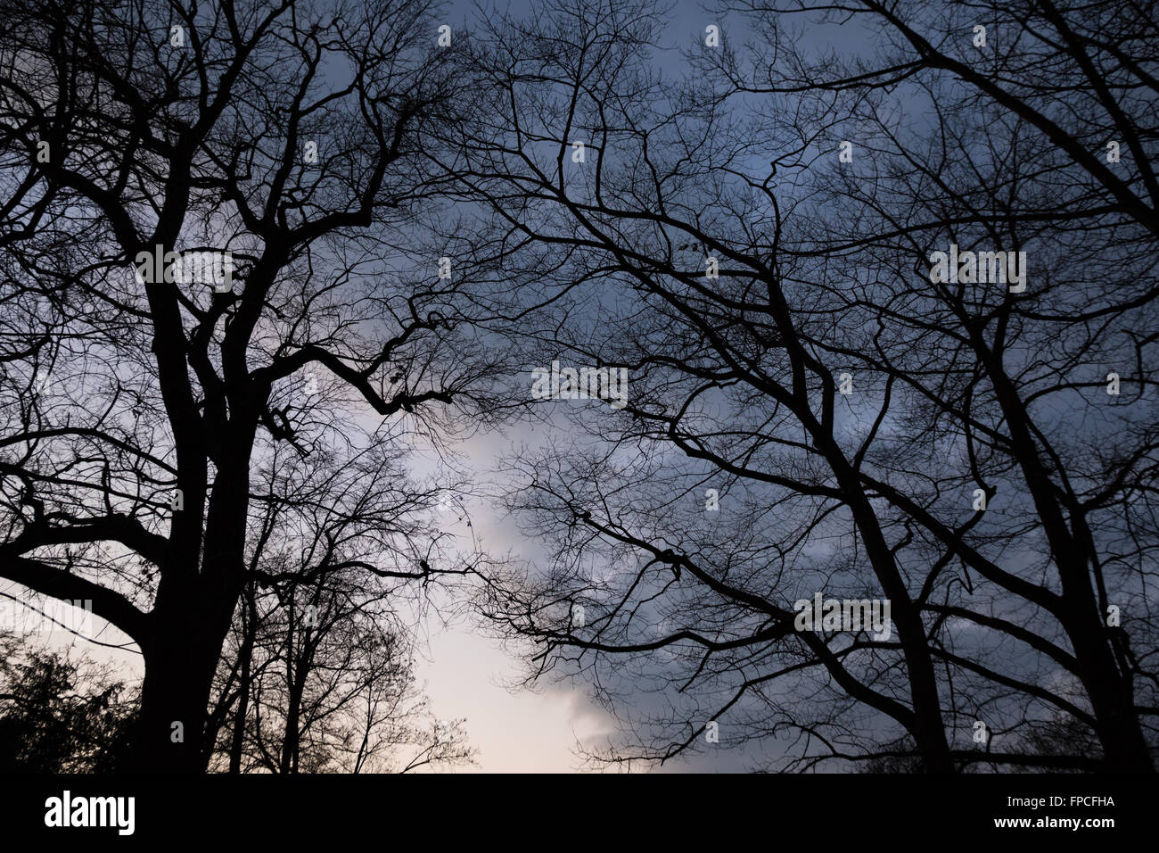 Eerie Trees with spooky and ominous atmosphere - Stock Image