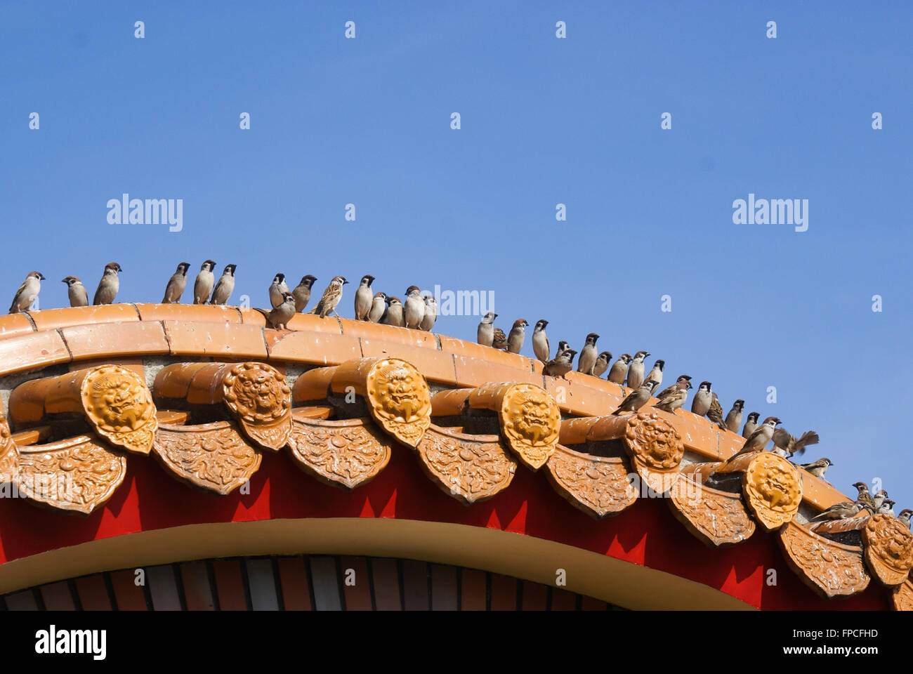 A row of sparrows perching on Chinese-style eaves of Sun Moon Lake Wen Wu Temple in Nantou County, Taiwan - Stock Image