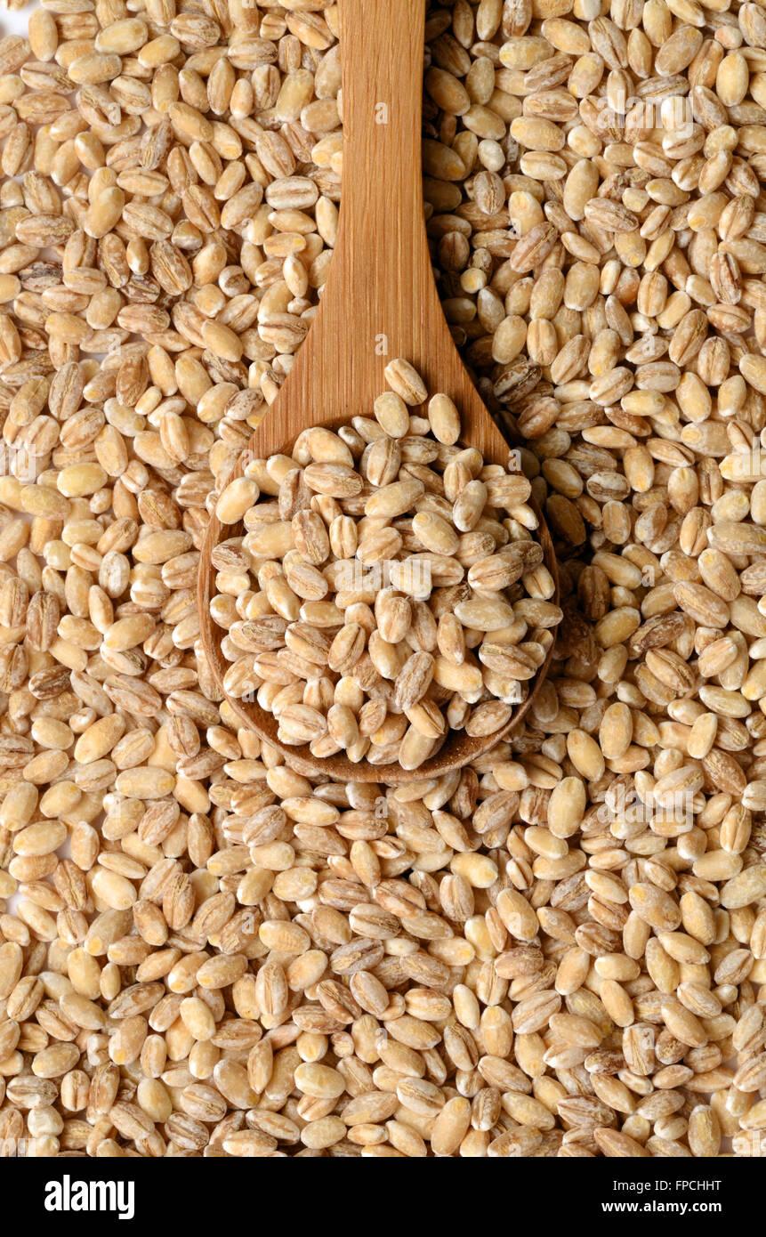 Uncooked barley grain seeds close up shot - Stock Image