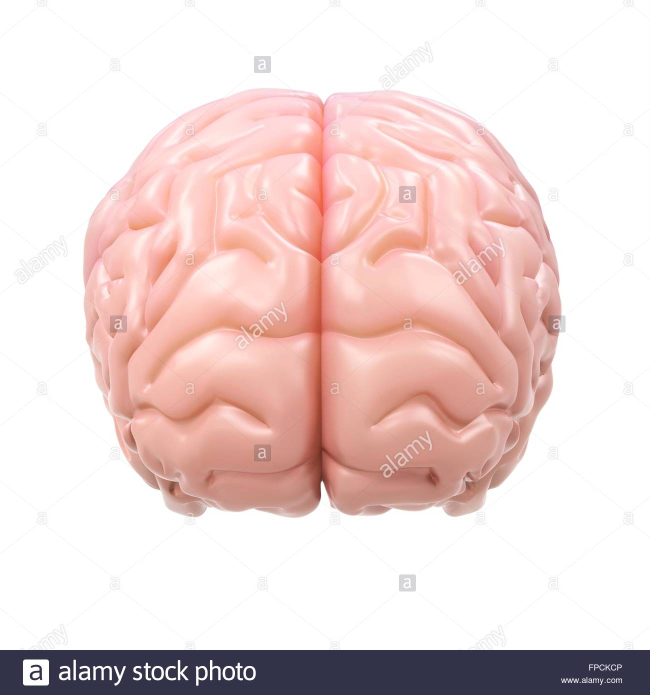 Detailed Brain Cut Out Stock Images Pictures Alamy