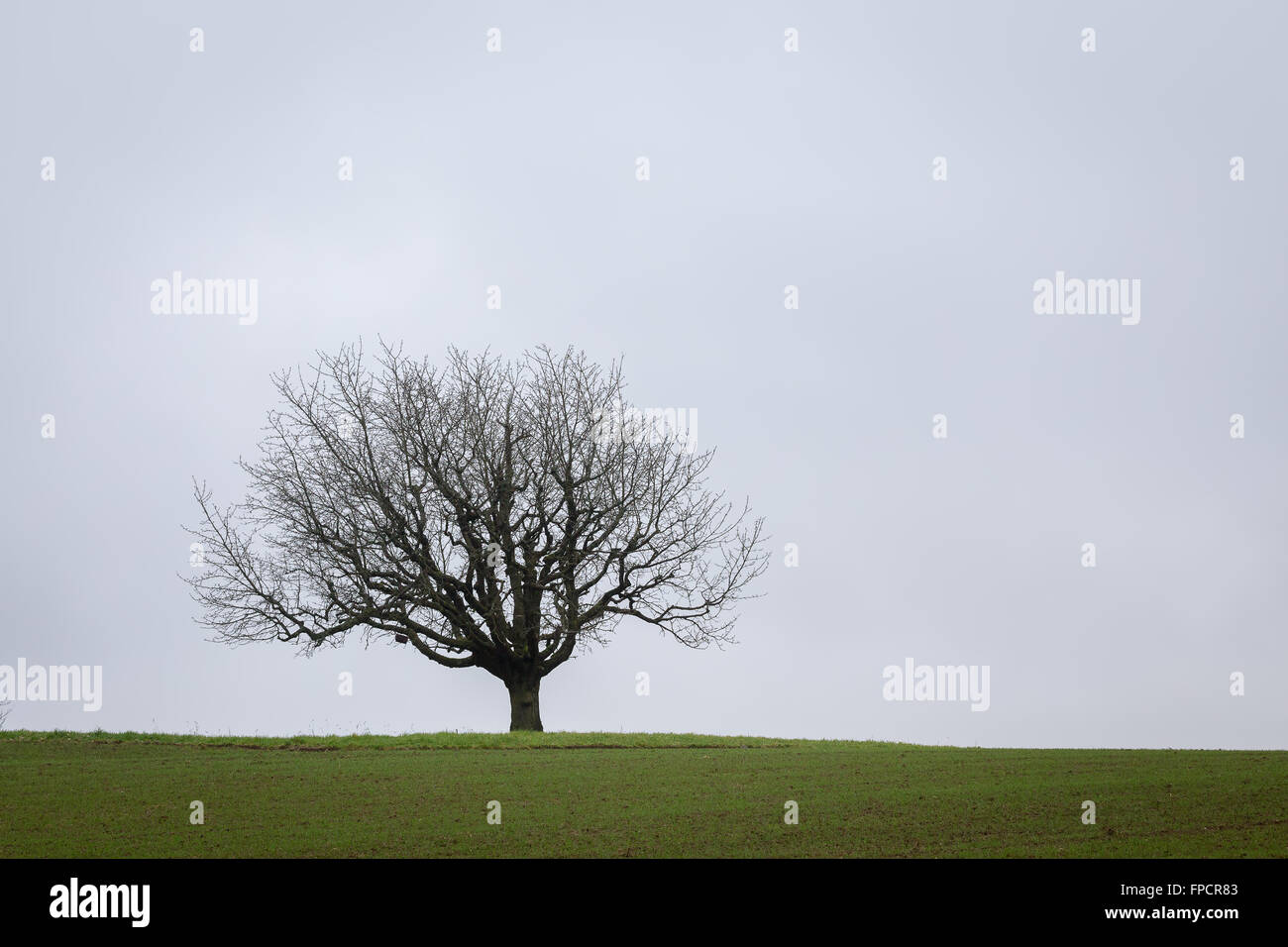 Lonely Tree and Fog. - Stock Image