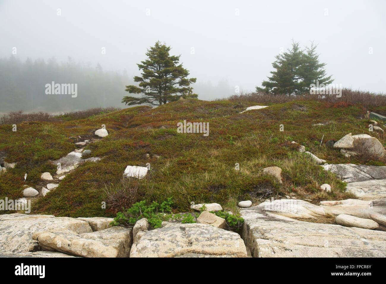 Foggy landscape with spruces and light boulders - Stock Image