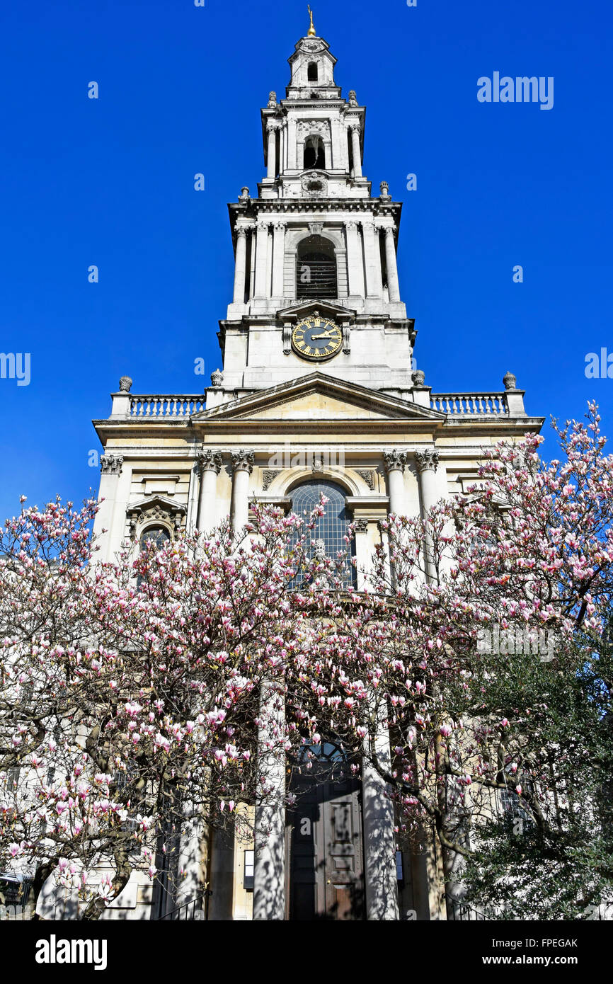 The Strand London Church tower and west front of St Mary Le Strand Magnolia tree blossom official church of the - Stock Image