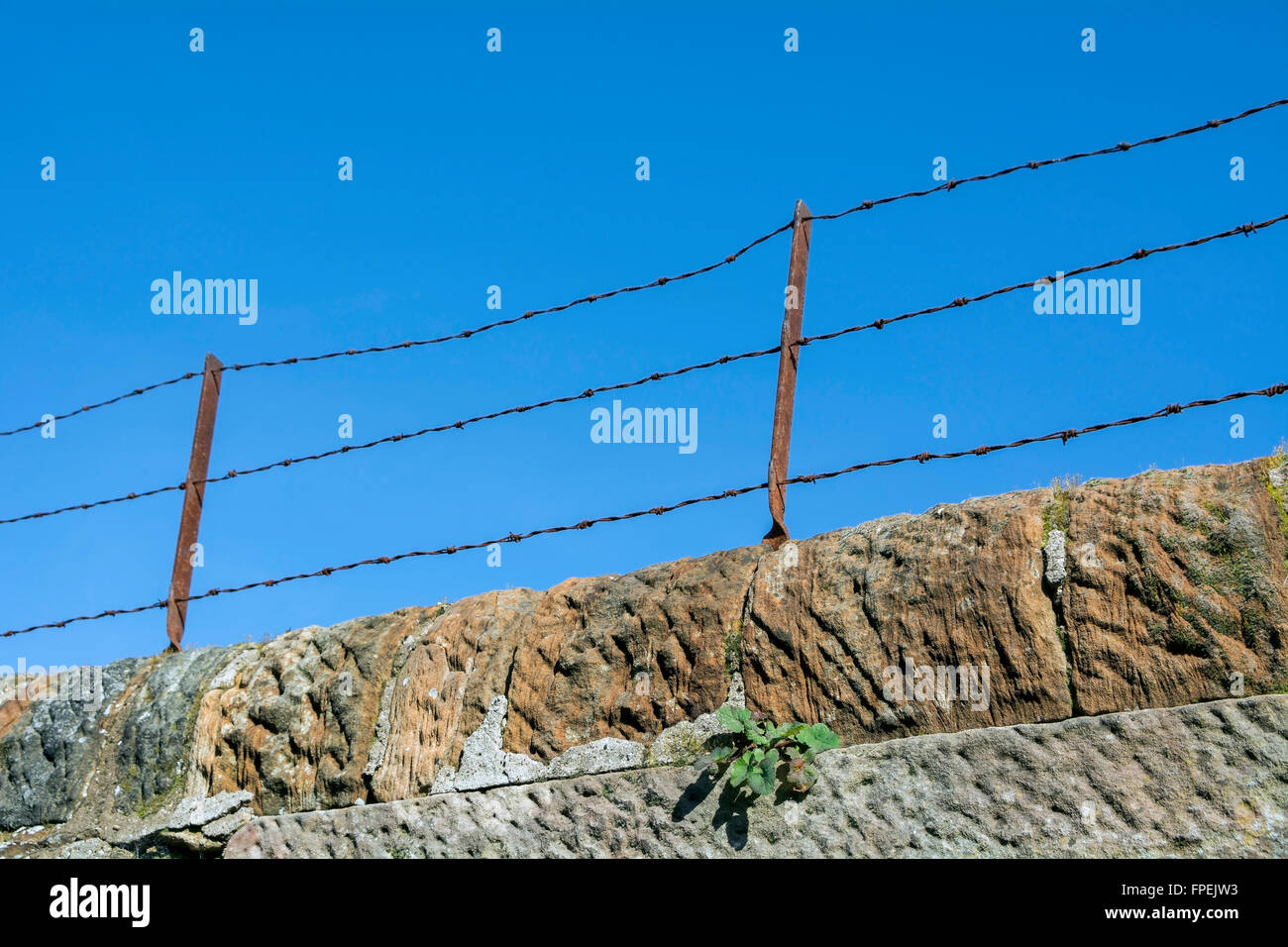 Old style barbed wire topped wall to deter intruders. - Stock Image