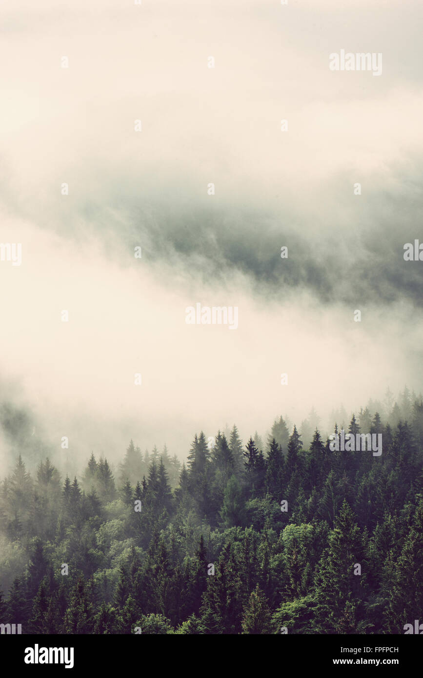 Evergreen forests on mountain slopes enveloped in low lying cloud for a dreamy landscape, vertical view - Stock Image