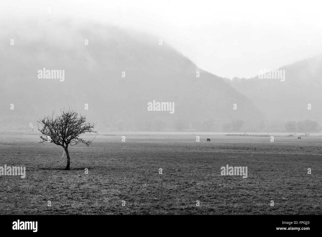 Tree in the fog in the forest at mountain - Stock Image