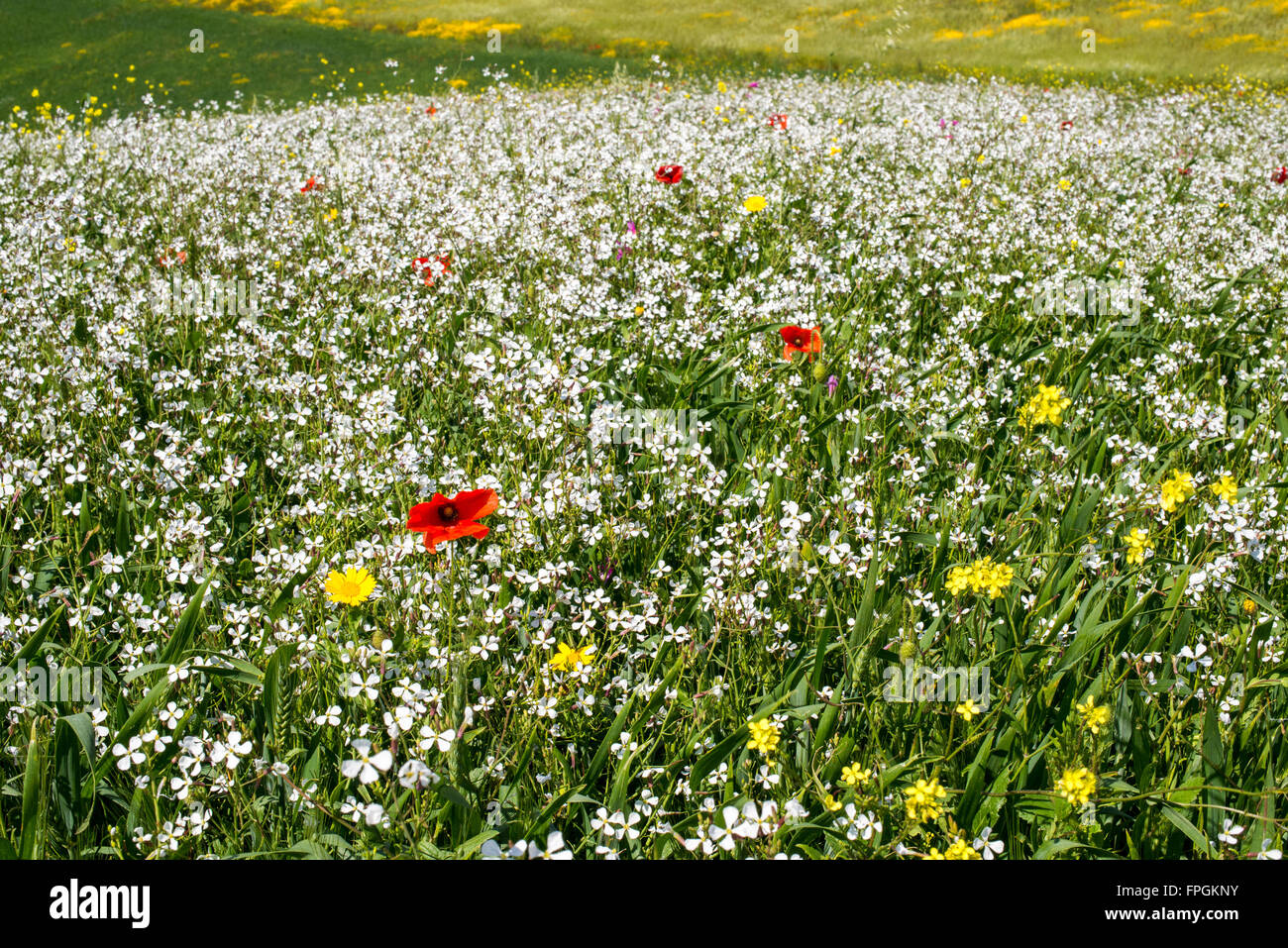 Very colorful field of flowers. Spring begins Stock Photo: 99941015 ...