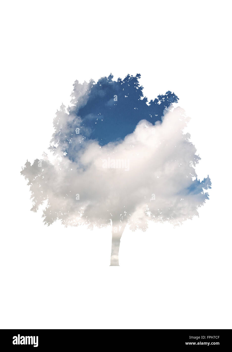 Artistic nature and weather blue sky and cloud overlay on the silhouetted shape of a leafy tree isolated on white - Stock Image