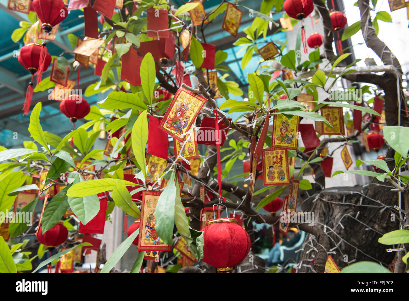 HO CHI MINH, VIETNAM - JANUARY 27, 2016: Decorated tree for Tet, the Vietnamese New Year which takes place on February Stock Photo