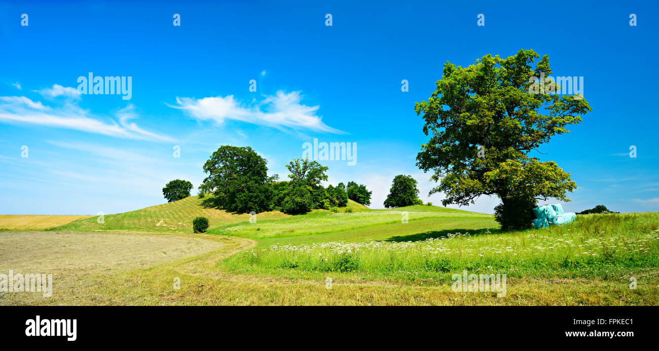 cultural landscape with single oak, agricultural extensive used meadows, Andechs, Bavaria, Germany - Stock Image
