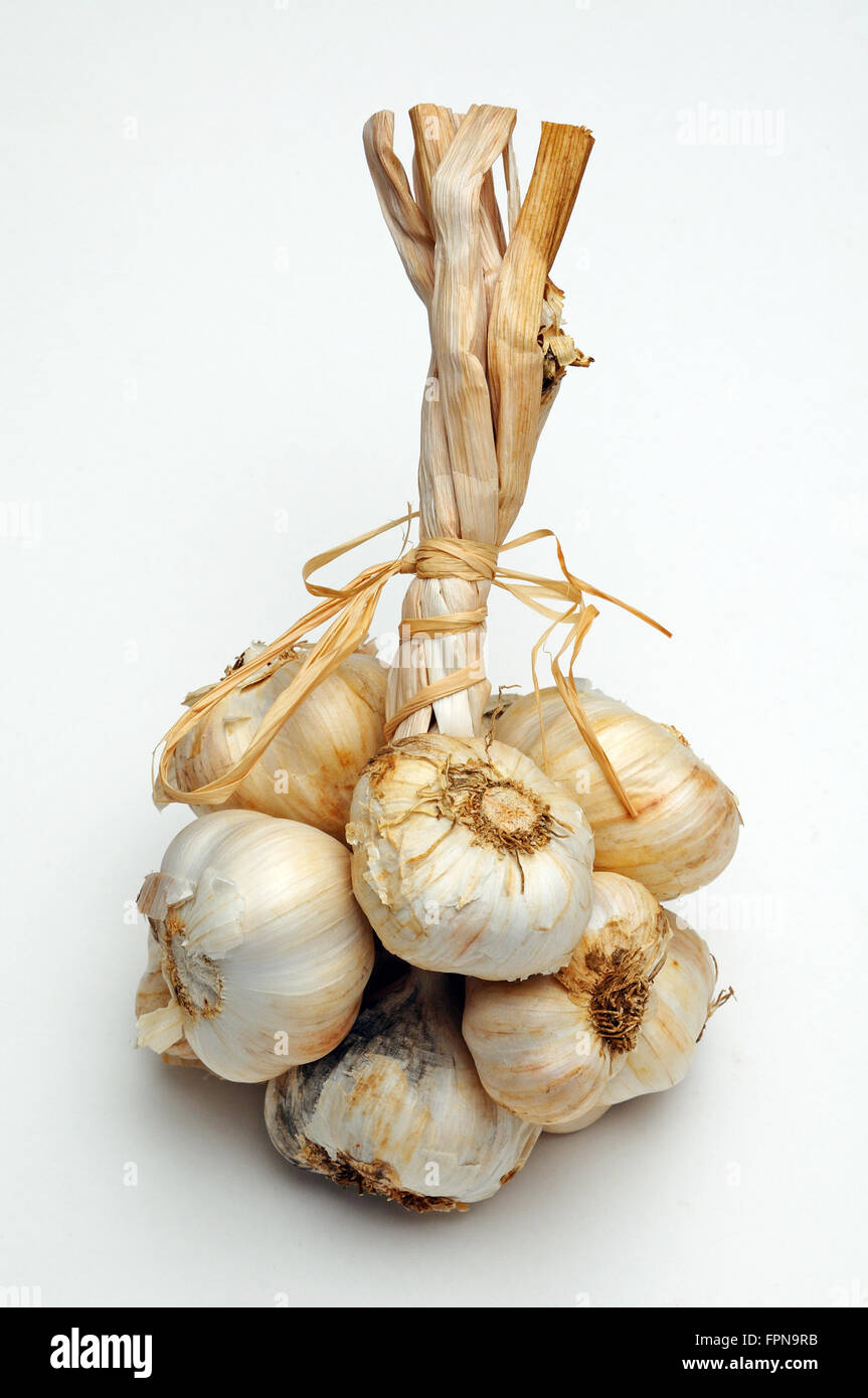 Solent Wight garlic grappe against a plain background Stock Photo
