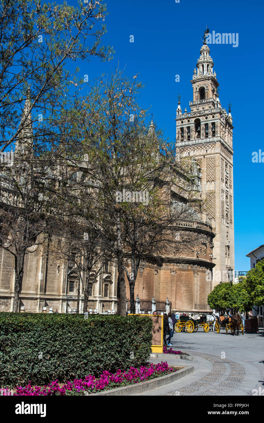 Giralda bell tower, Cathedral, Seville, Andalusia, Spain - Stock Image