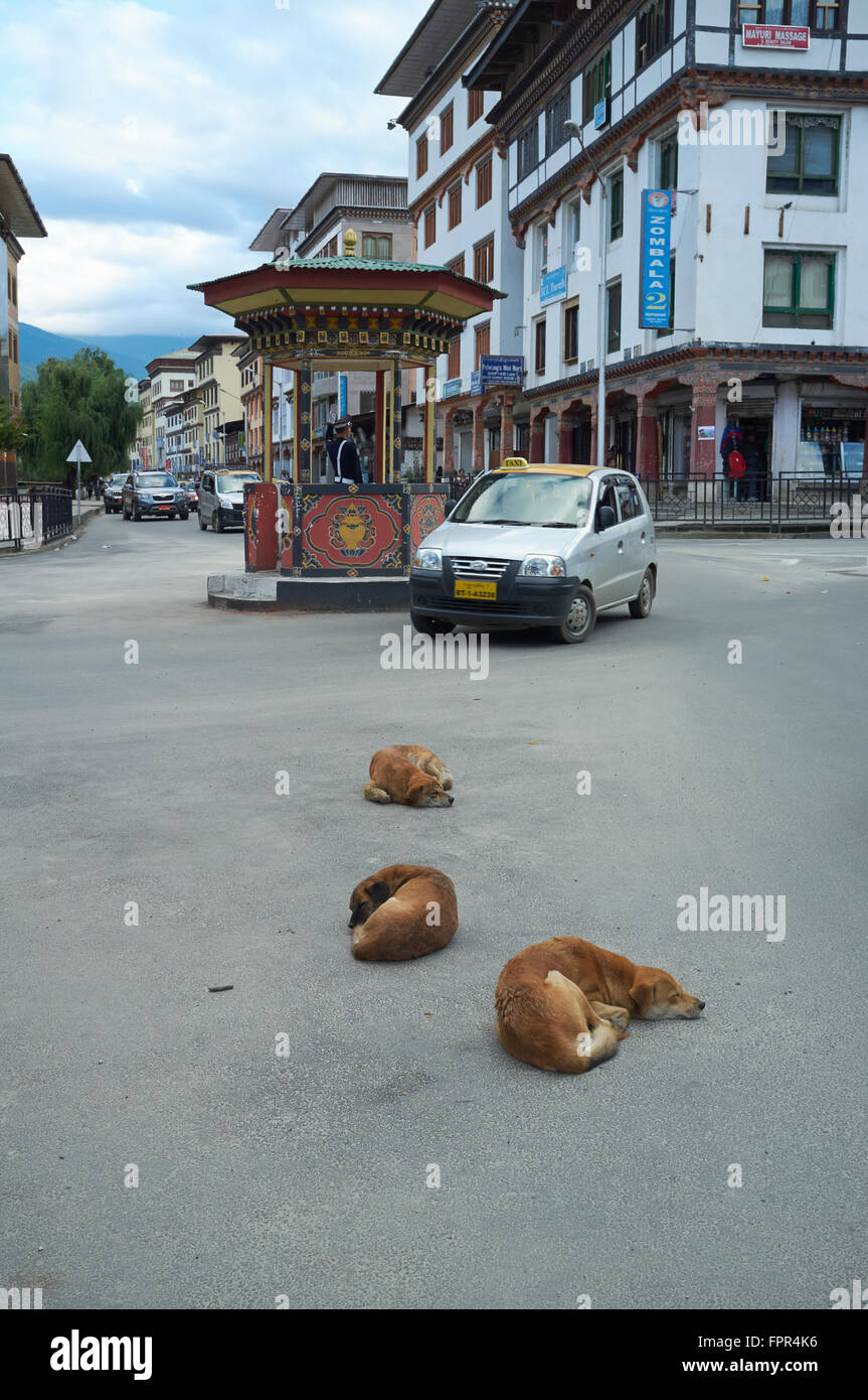 Stray dogs sleeping on the high street (Norzin Lam), Thimphu, Bhutan. - Stock Image