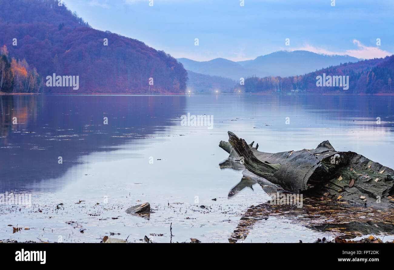 Large gray driftwood log floating in a lake in the evening in autumn. - Stock Image