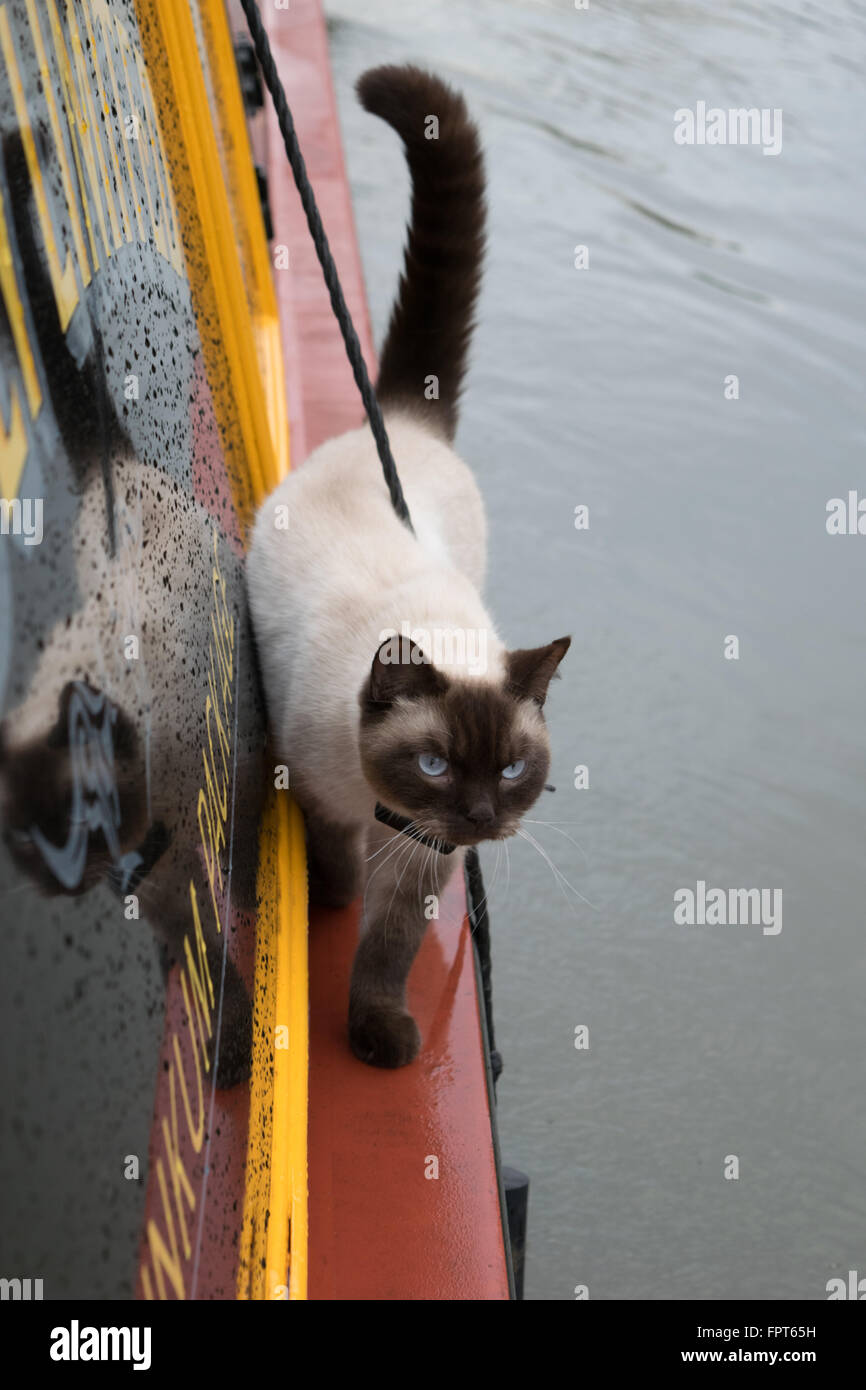 Cat on Boat - Stock Image