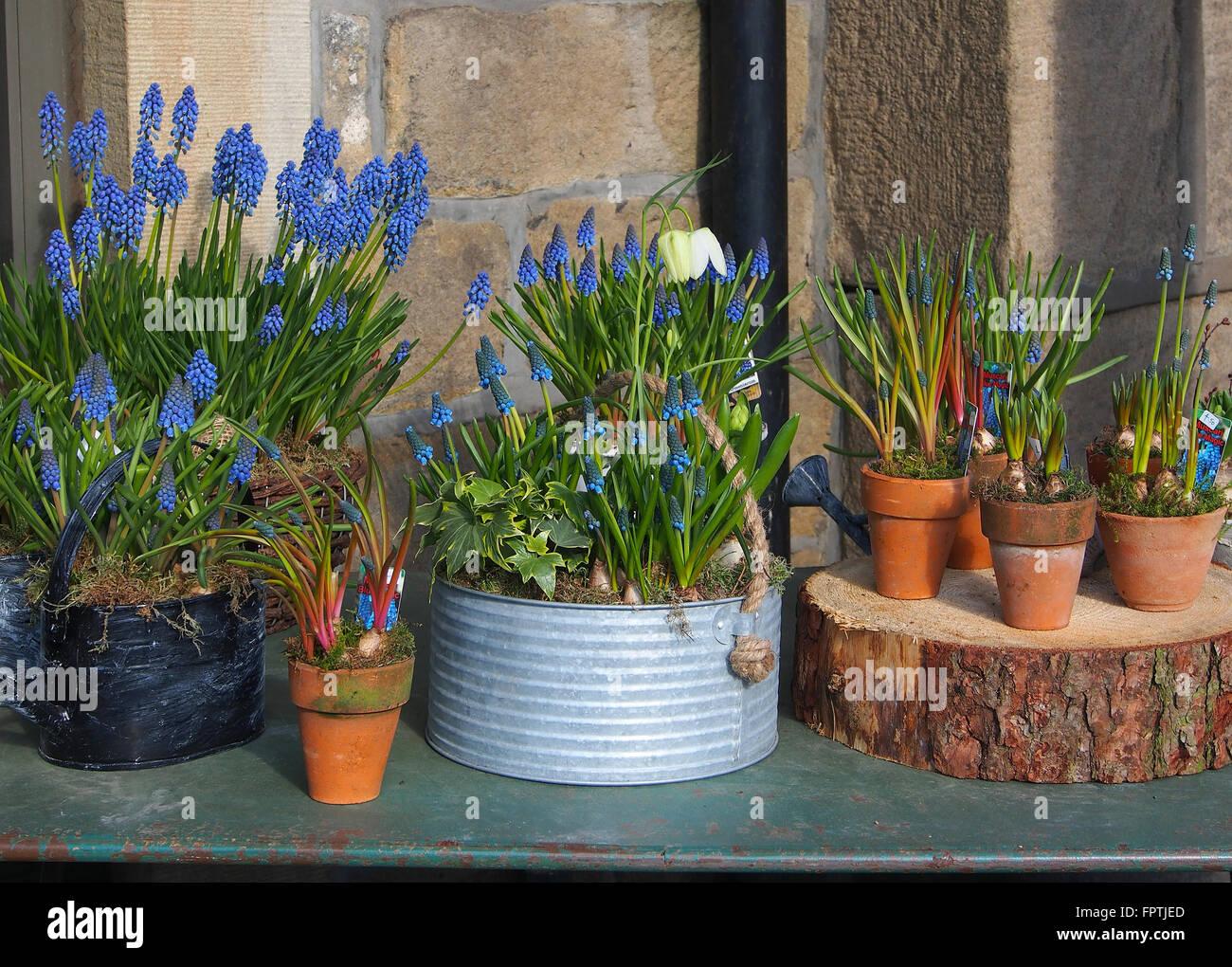 Blue Flower Pots Terracotta Stock Photos Amp Blue Flower