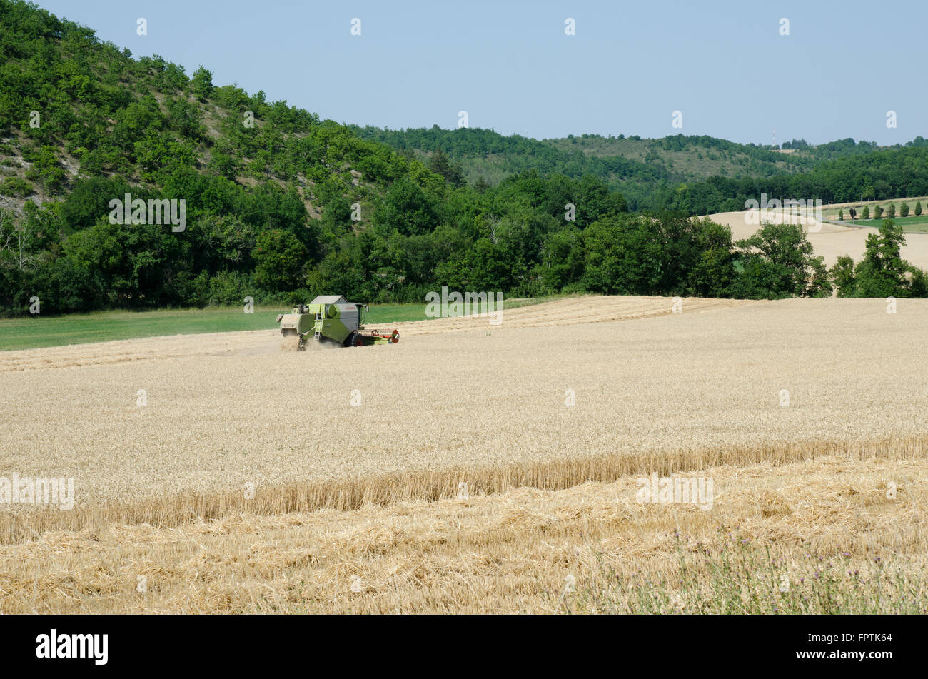 Combine harvester in a wheat field - Stock Image