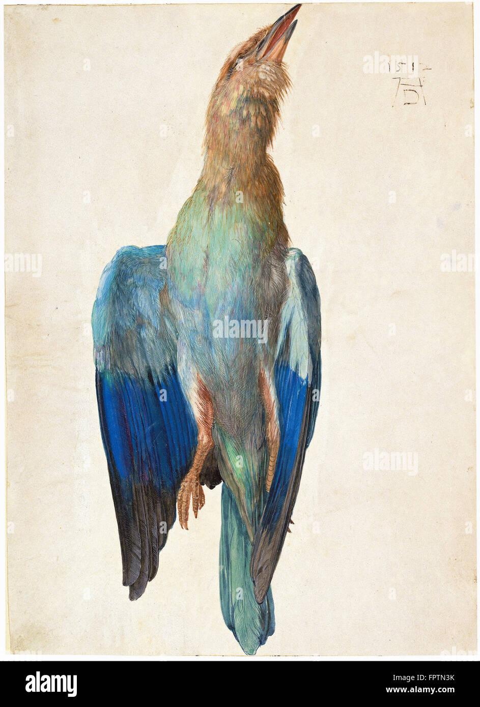 Albrecht Durer - Dead Blue Roller -  1500 (or 1512) - Stock Image
