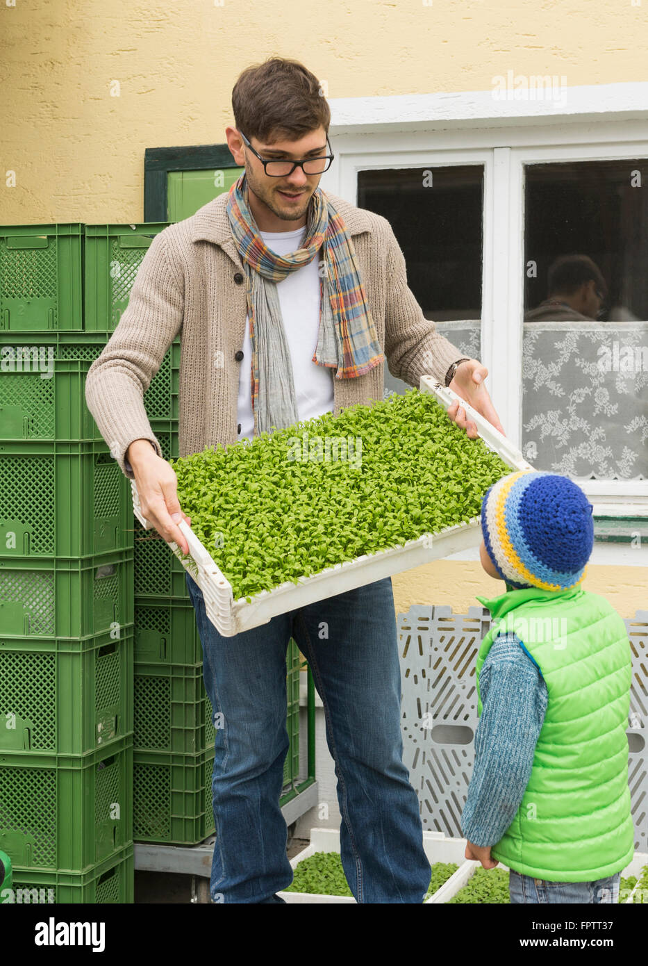Organic farmer showing a plant crate for salad to his son in farm, Bavaria, Germany - Stock Image