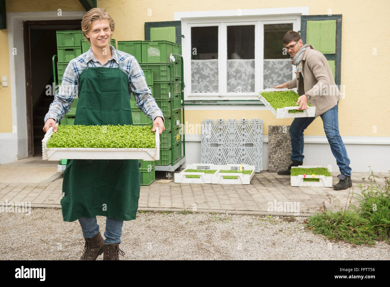 Organic farmers holding a plant crate for salad in farm, Bavaria, Germany - Stock Image