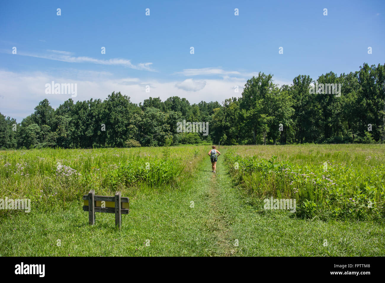 Female hiker through open field in a park in Virginia along the Appalachian Trail - Stock Image
