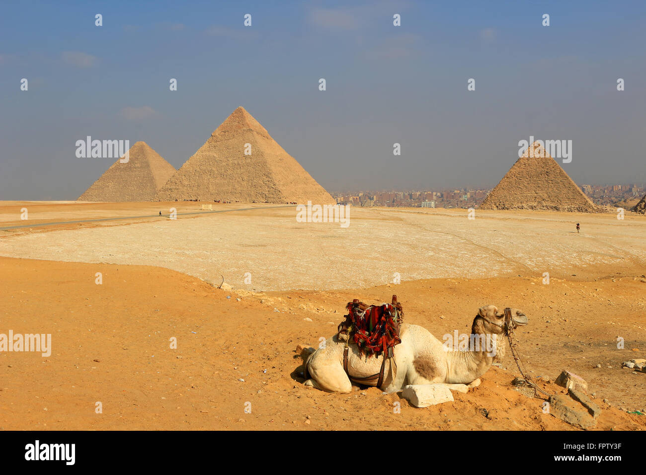 Camel relaxing at The Pyramids of Giza, man-made structures from Ancient Egypt in the golden sands of the desert - Stock Image