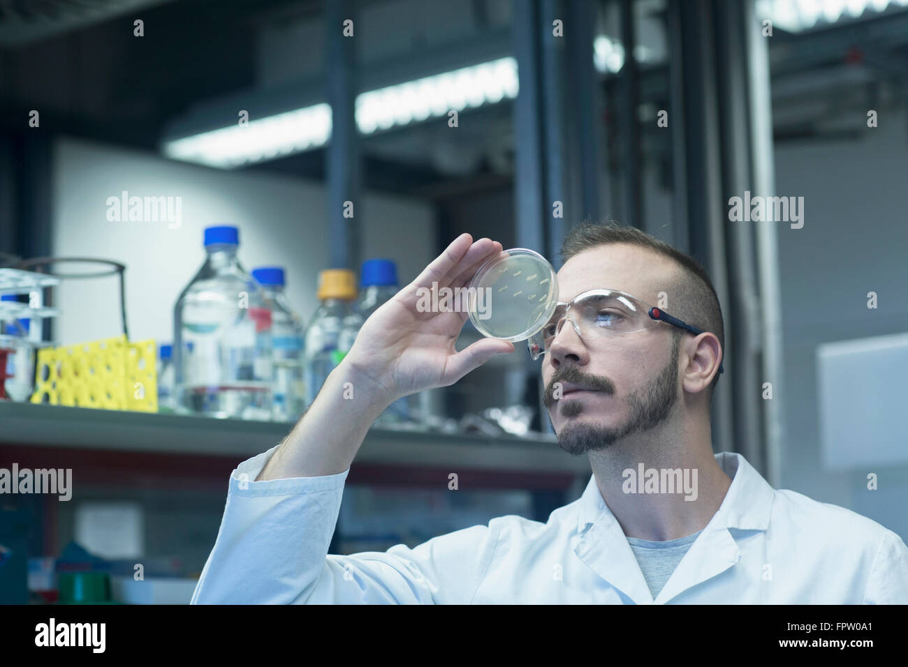 Young male scientist examining micro organisms in petri dish at a pharmacy laboratory, Baden-Württemberg, German - Stock Image
