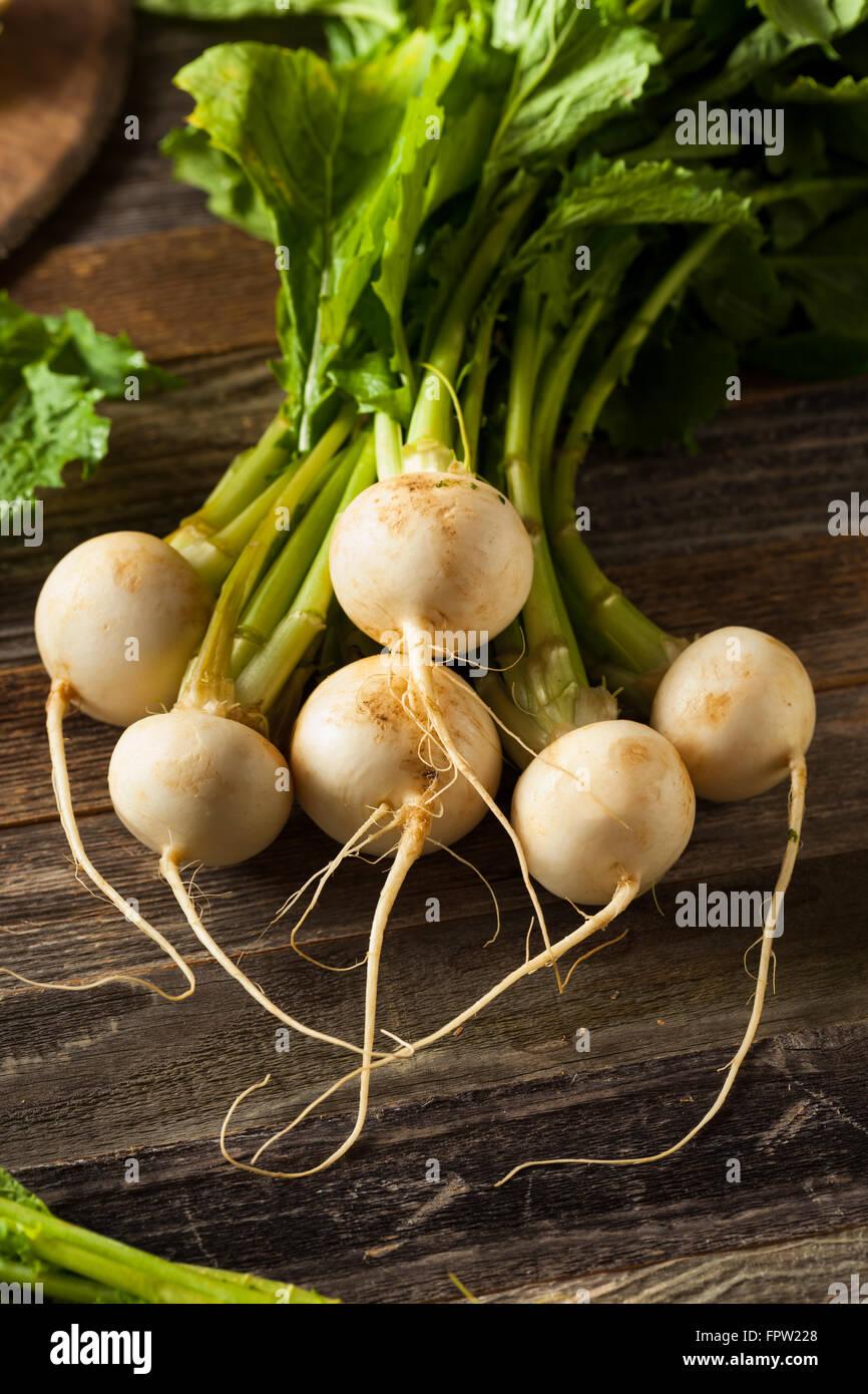 Raw Organic White Radishes with Green Stems - Stock Image