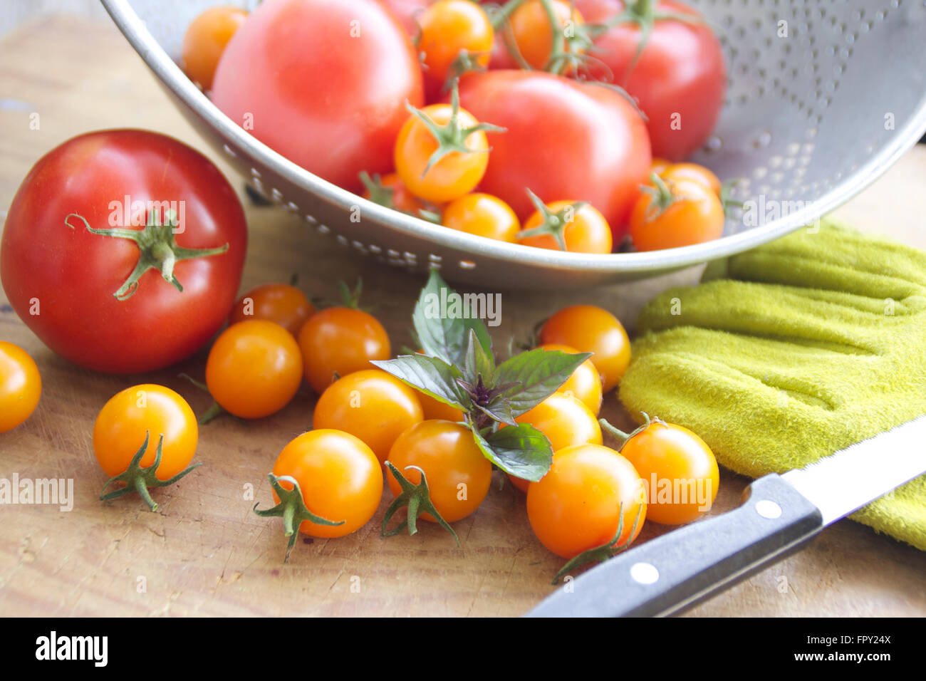 Tomato harvest with a veriety of red and orange cherry tomatoes, green gloves and knife Stock Photo