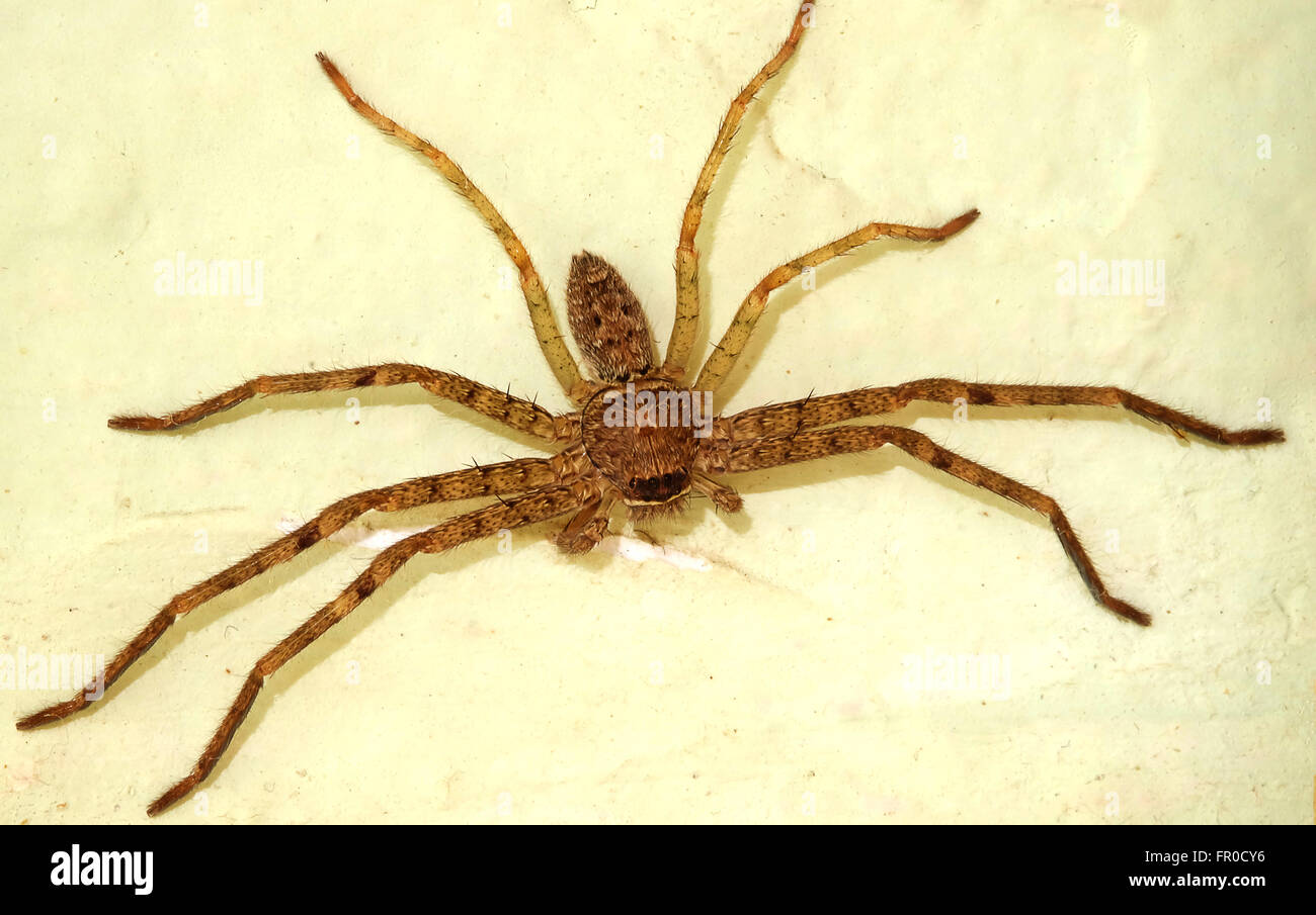 Spider On Wall Stock Photos & Spider On Wall Stock Images - Alamy