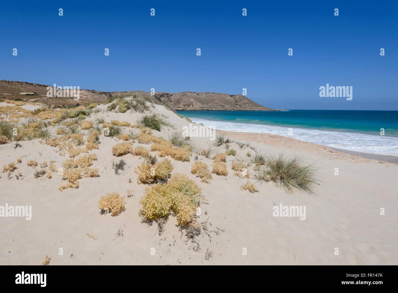 Coastal Vegetation, Red Bluff, Point Quobba, near Carnarvon, Coral Coast, Gascoyne Region, Western Australia, WA, - Stock Image