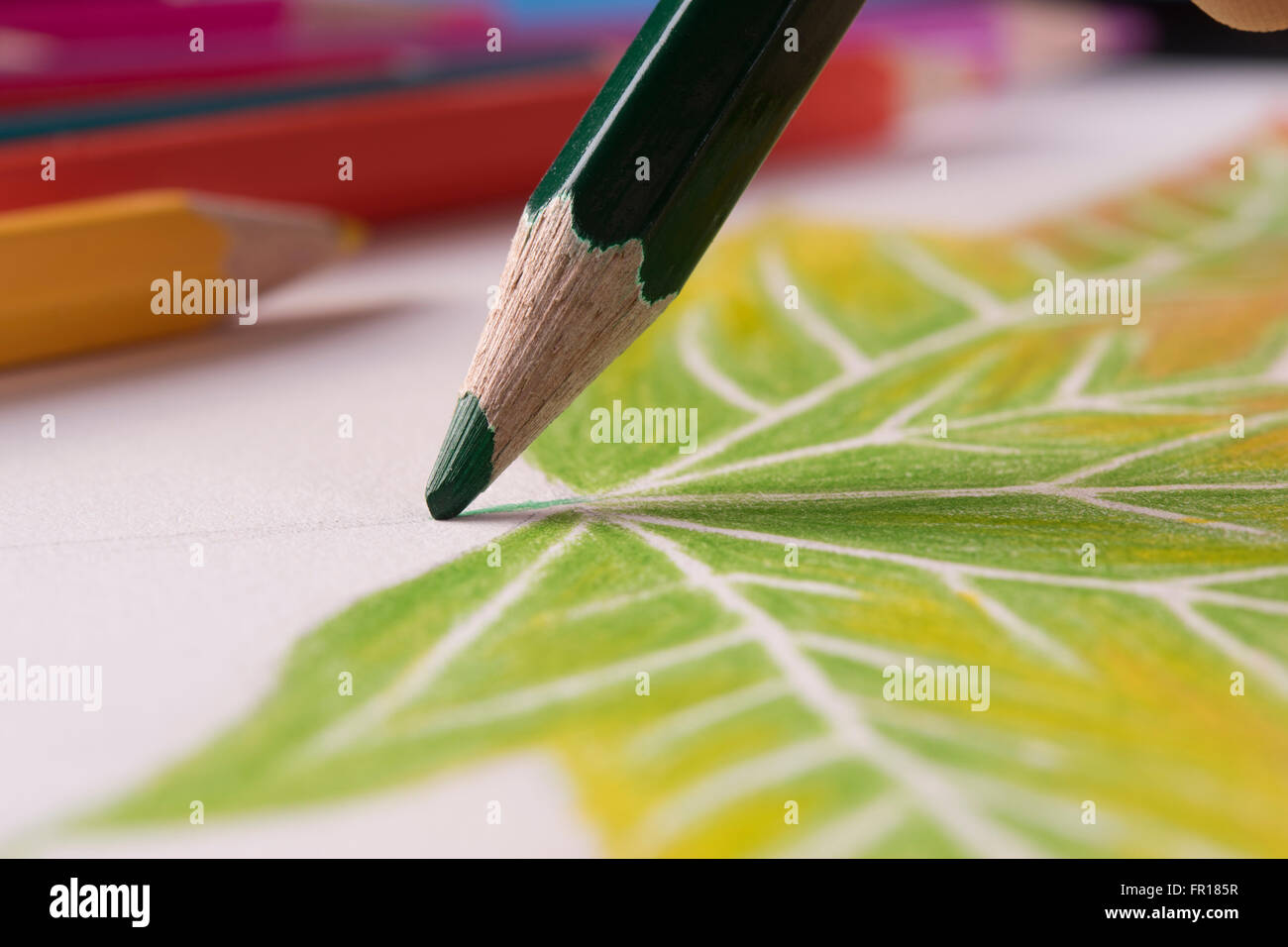 Drawing Leaf With Green Color Pencil Stock Photo Alamy