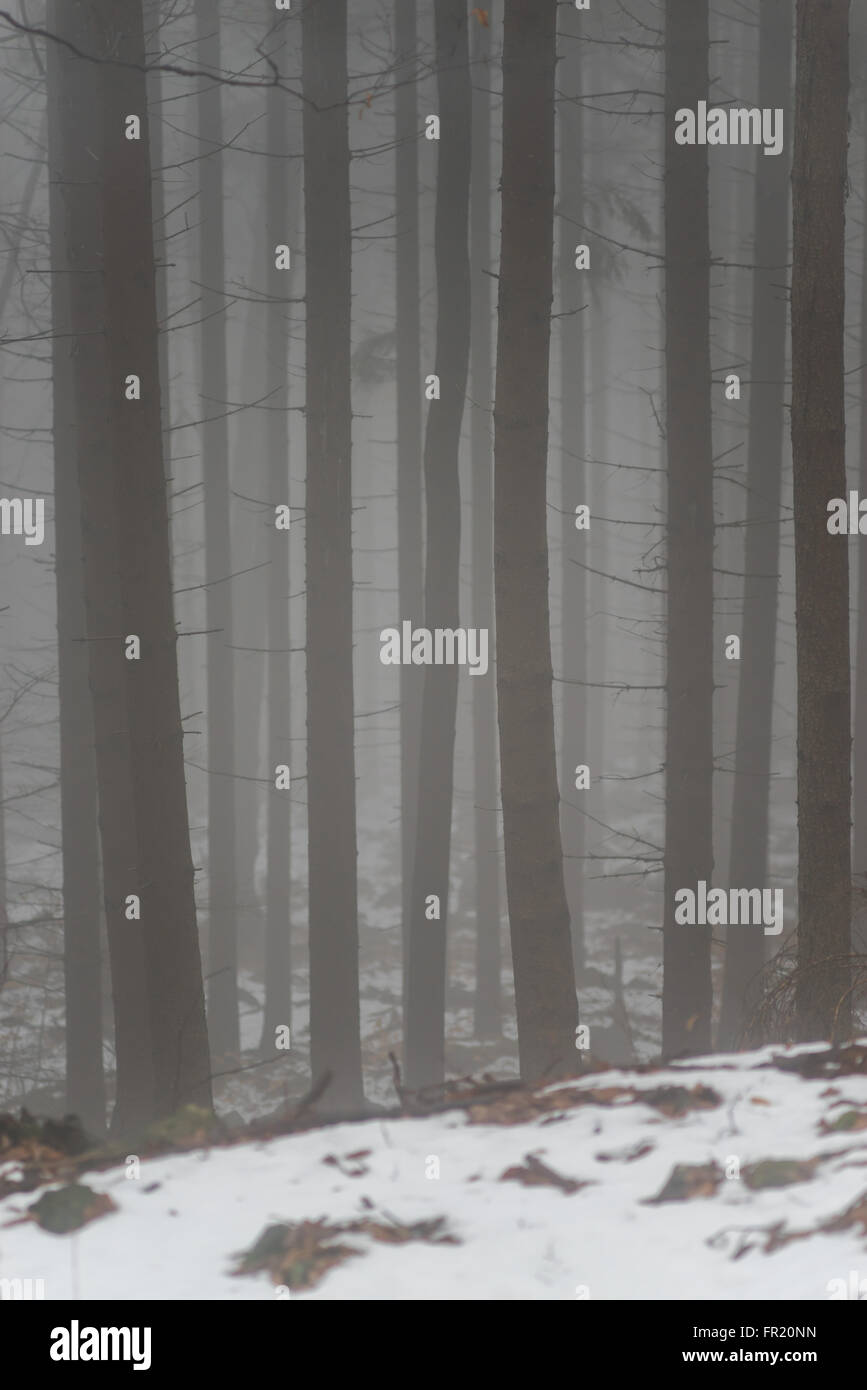 Forest in the mist at thaw Sleza Mount Landscaped Park - Stock Image