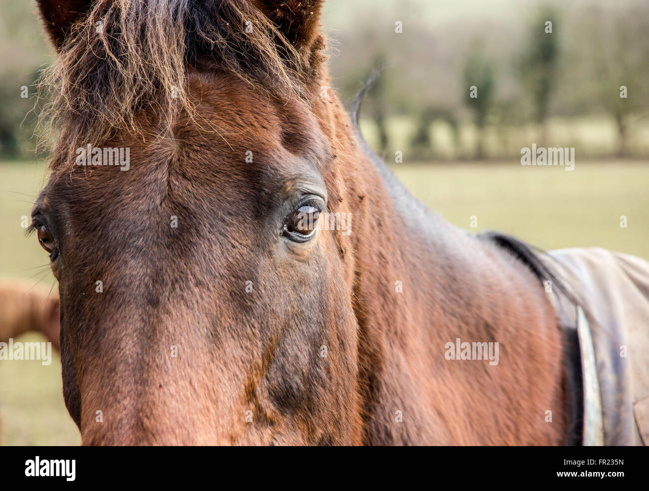 Through the eyes of a Horse - Stock Image