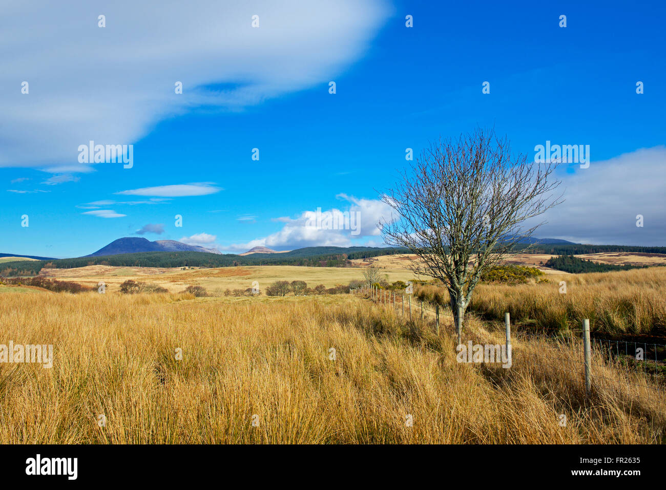 Grassland on Machrie Moor, Isle of Arran, North Ayrshire, Scotland UK - Stock Image