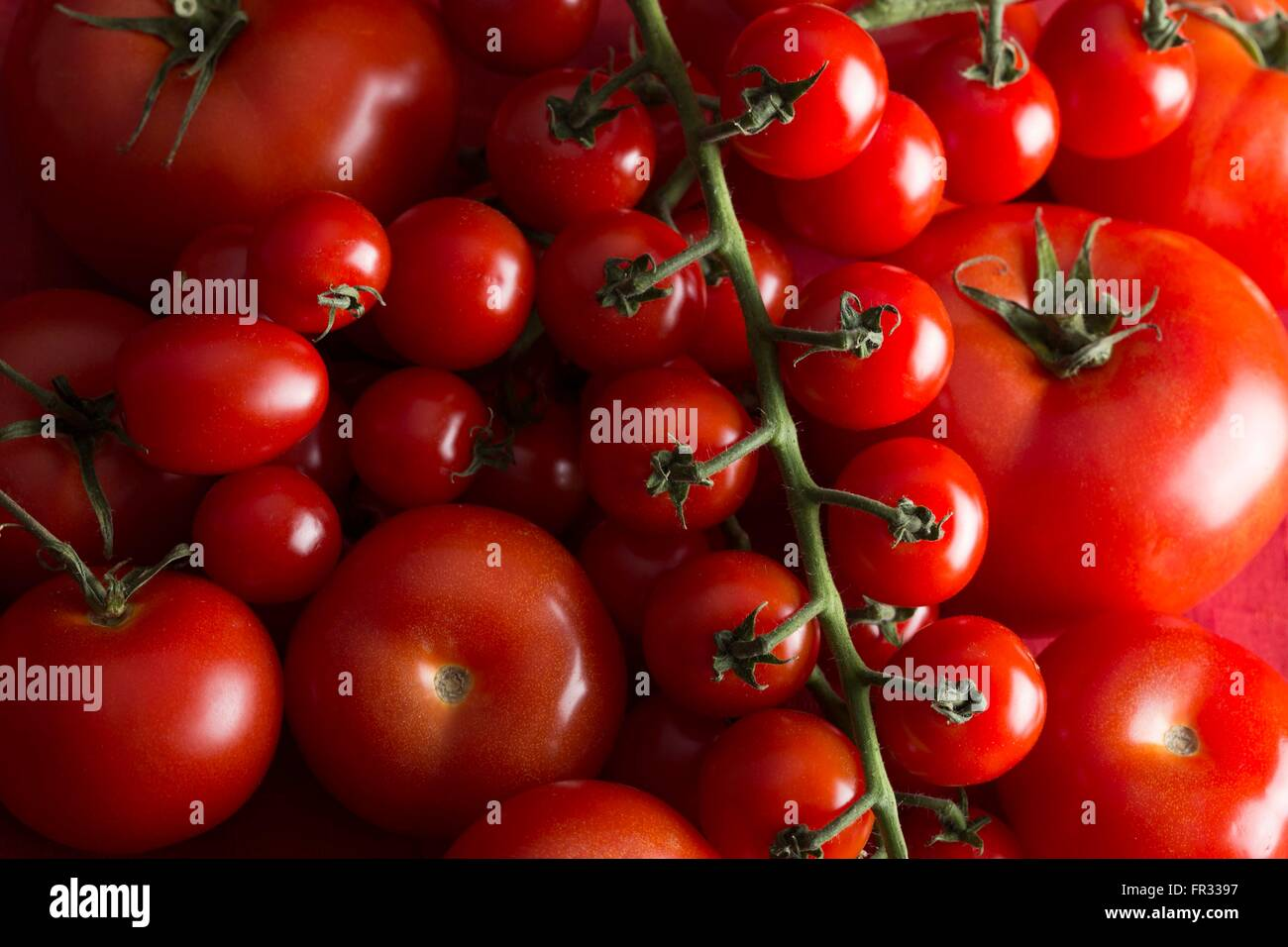 Closely packed image of tomatoes of different sizes - Stock Image