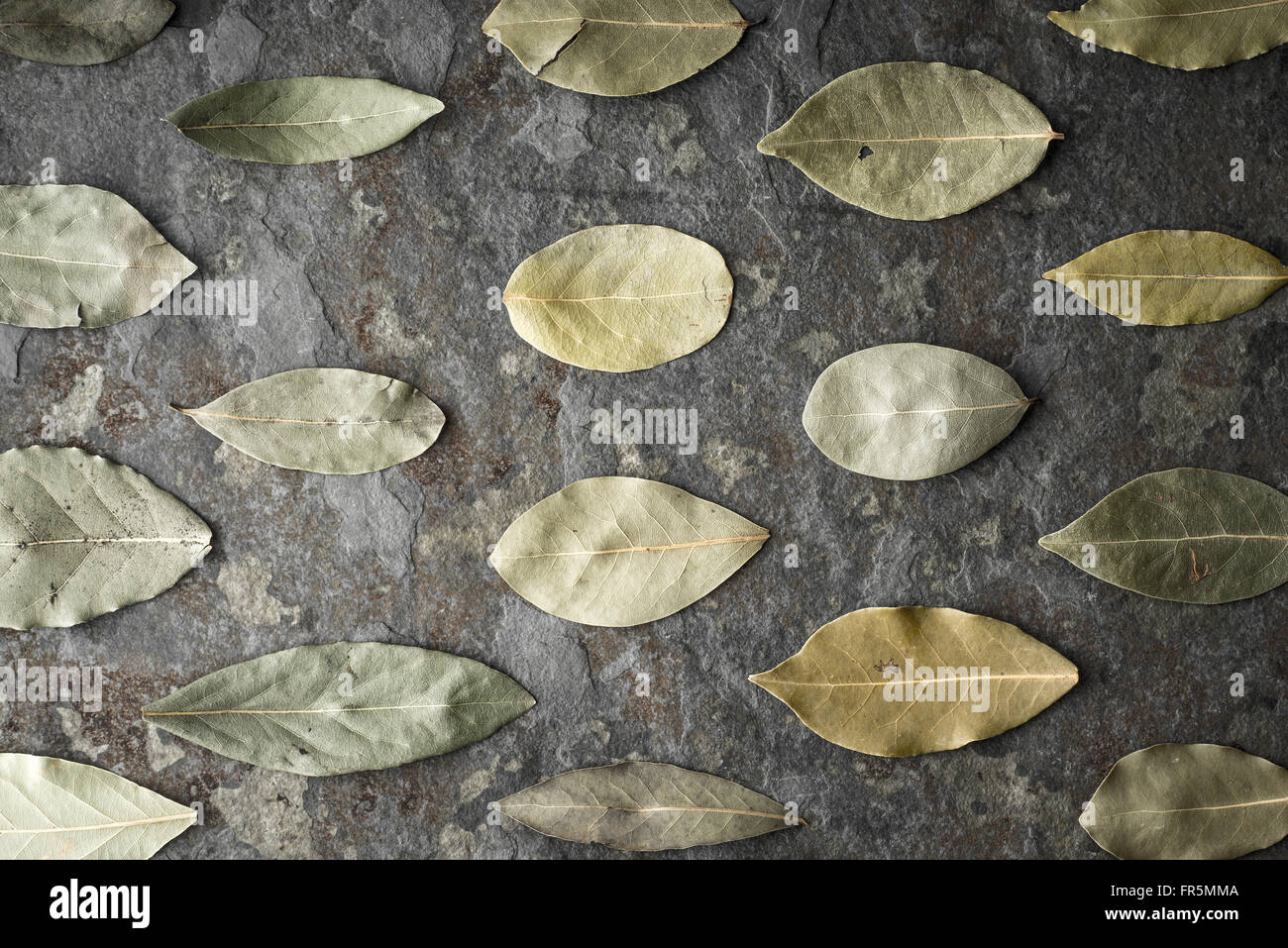 Leaves of the tree of the laurel on the stone table horizontal super still life - Stock Image