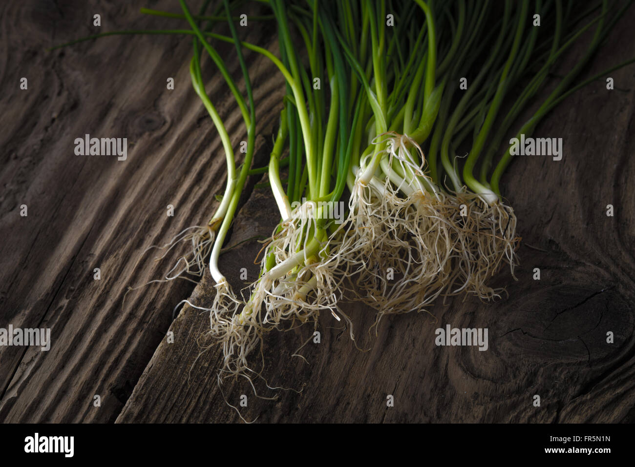 Green onion stalks and roots on old boards horizontal - Stock Image