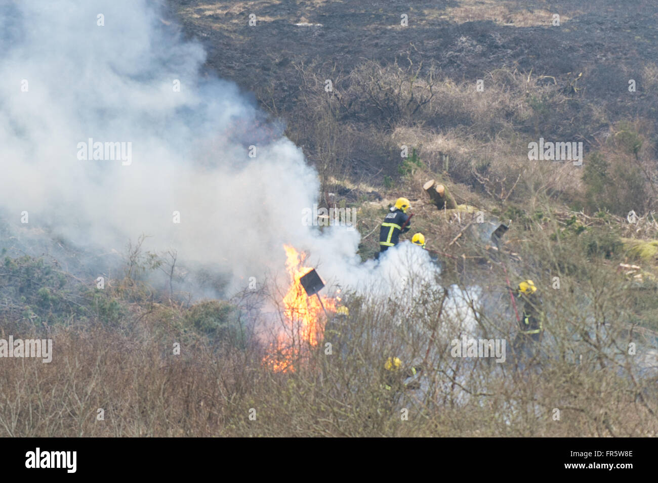 Ballydehob, Ireland. 21st March, 2016.  A grass fire that started yesterday evening on the slopes of Mount Corrin - Stock Image