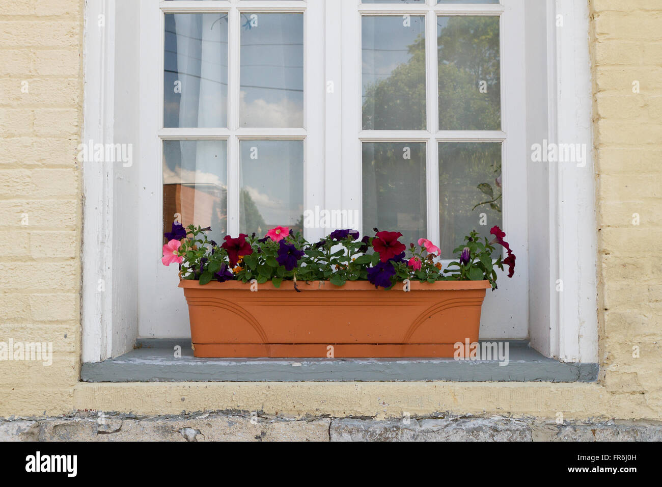 Flower box in window of painted brick home - Stock Image