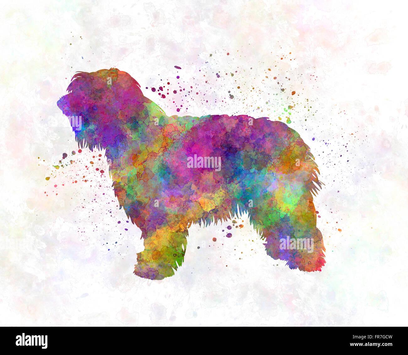 Catalonian Sheepdog in watercolor - Stock Image