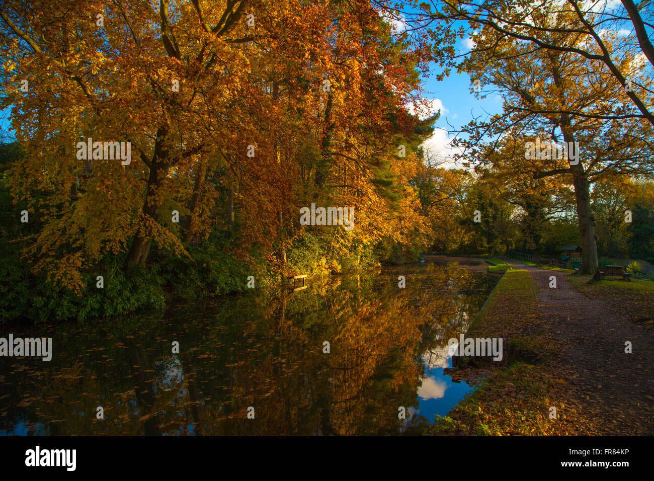 Autumn on the Basingstoke Canal near Fleet Hampshire. England UK - Stock Image