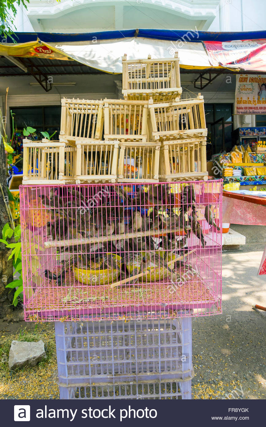 Caged song birds for sale, Vientiane, Laos - Stock Image
